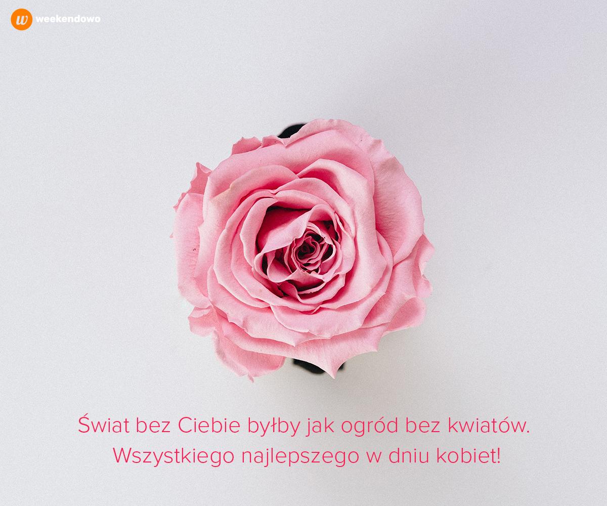 Róża na Dzień Kobiet kartka
