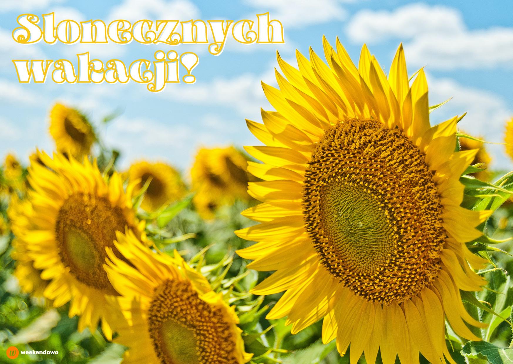 Słonecznych wakacji kartka