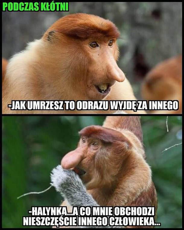 Kłótnia u Januszów
