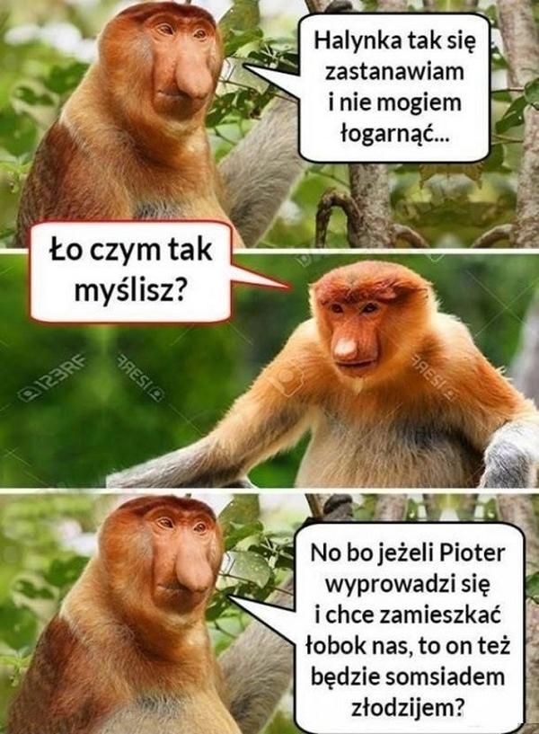 Rozkmina Janusza :D