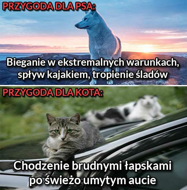 Przygoda dla psa vs przygoda dla kota :D