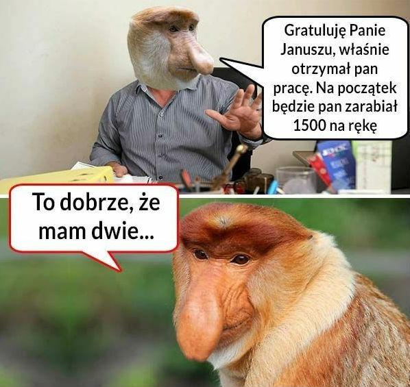Sukces Janusza