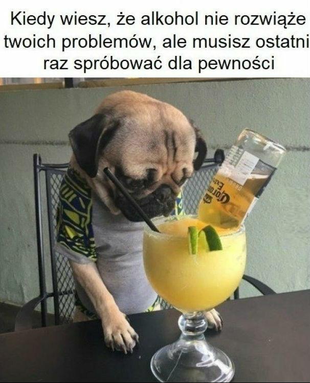Prawda o alkoholu