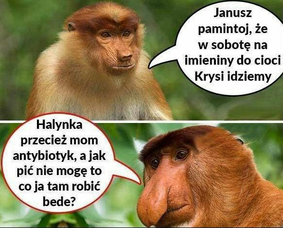 Janusz w gościach