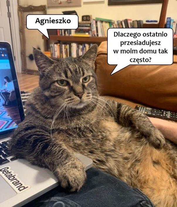 Pytanie kota :D