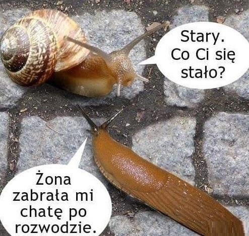Rozmowa dwóch ślimaków