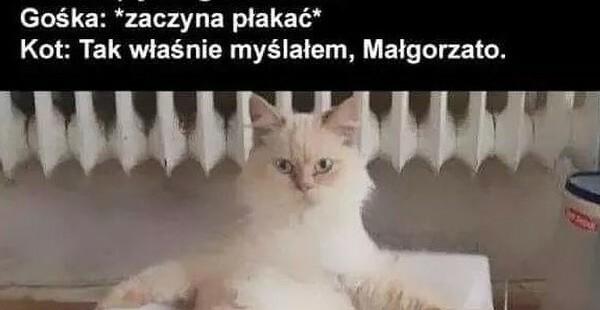 Wredny kot :D