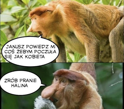 Janusz komplementu