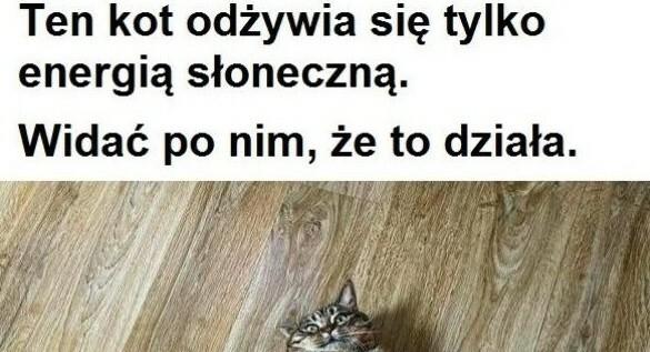 Wyjątkowy kot