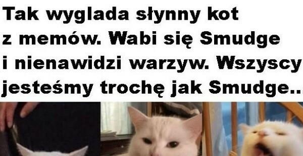 Słynny kot z memów