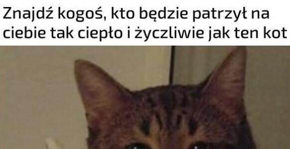 Kojący wzrok kotka