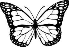 Motyle Kolorowanki Do Druku