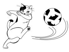 Kot piłkarz