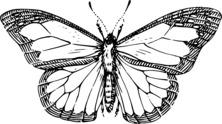 Przepiękny motyl