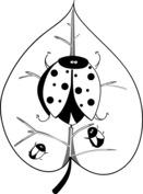 Biedronki na liściu