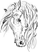 Piękny koń