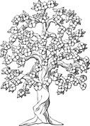Kwitnące drzewo