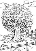Drzewo w ogrodzie