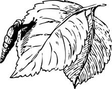 Liście z robaczkiem