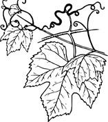 Mały i duży liść