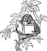 Małpa na drzewie