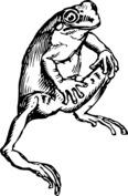 Siedząca żaba