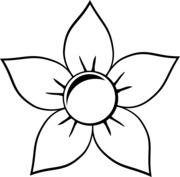 Kwiat slonecznika