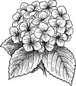 Bukiet kwiatów