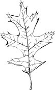 Postrzępiony liść