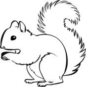 Prosta wiewiórka