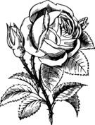 Realistyczna róża