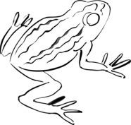 Żaba szablon