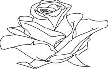 Róża wzór