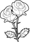 Ładne róże