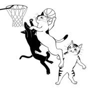 Kot koszykarz