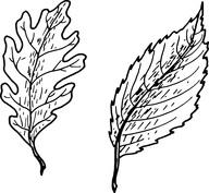 Dwa liście