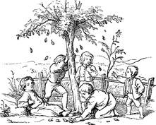 Spotkanie pod drzewem