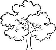 Gęste drzewo