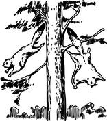 Zabawa na drzewie