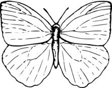 Duży motyl