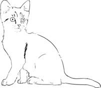 Kot szablon
