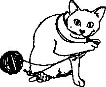 Bawiący się kot