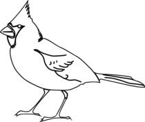 Ptak wzór
