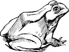 Realistyczna żaba
