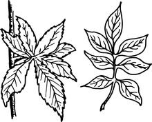 Eleganckie liście