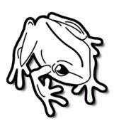 Mała żaba