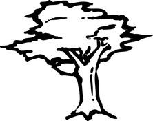 Drzewo na wietrze