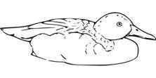 Kaczuszka