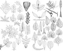 Różne liście