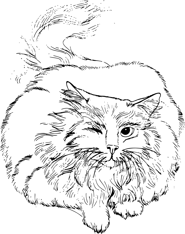 Perski Kot Kolorowanka Do Druku
